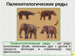 Палеонтологические ряды Палеонтологические ряды – это ряды ископаемых форм, связ
