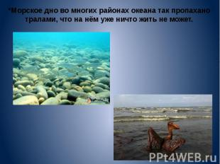*Морское дно во многих районах океана так пропахано тралами, что на нём уже ничт