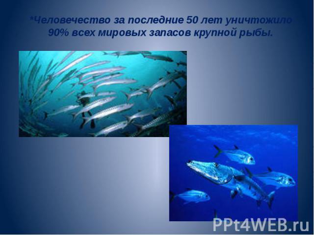 *Человечество за последние 50 лет уничтожило 90% всех мировых запасов крупной рыбы.