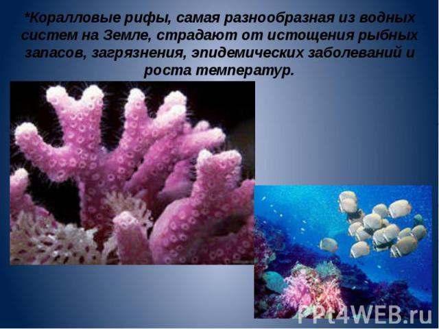 *Коралловые рифы, самая разнообразная из водных систем на Земле, страдают от истощения рыбных запасов, загрязнения, эпидемических заболеваний и роста температур.