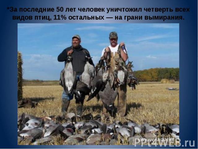 *За последние 50 лет человек уничтожил четверть всех видов птиц, 11% остальных — на грани вымирания.
