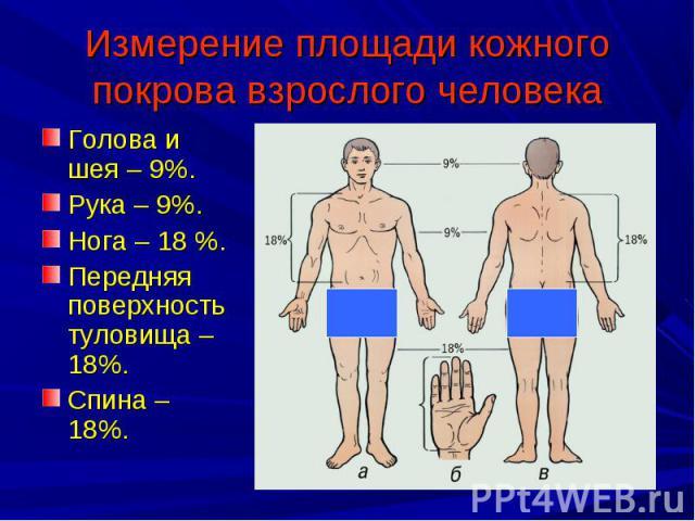 Измерение площади кожного покрова взрослого человека Голова и шея – 9%.Рука – 9%.Нога – 18 %.Передняя поверхность туловища – 18%.Спина – 18%.