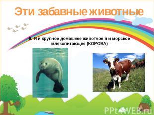 Эти забавные животные 6. Я и крупное домашнее животное я и морское млекопитающее
