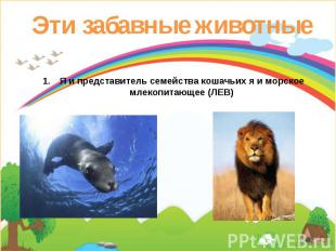 Эти забавные животные Я и представитель семейства кошачьих я и морское млекопита