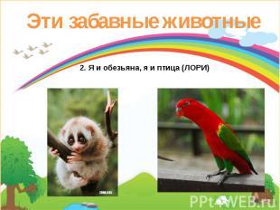 Эти забавные животные 2. Я и обезьяна, я и птица (ЛОРИ)
