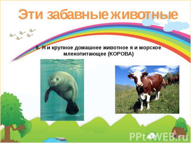 Эти забавные животные 6. Я и крупное домашнее животное я и морское млекопитающее (КОРОВА)