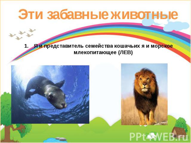 Эти забавные животные Я и представитель семейства кошачьих я и морское млекопитающее (ЛЕВ)