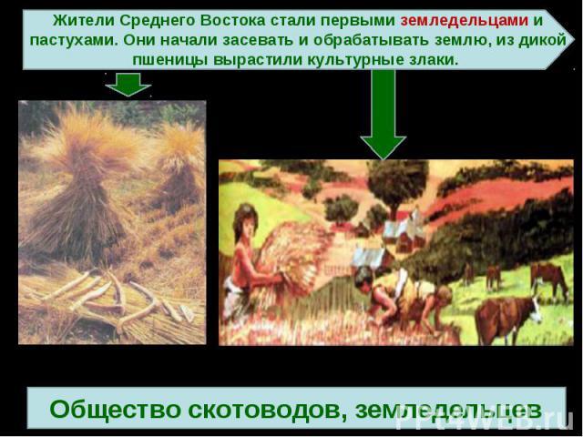 Жители Среднего Востока стали первыми земледельцами и пастухами. Они начали засевать и обрабатывать землю, из дикой пшеницы вырастили культурные злаки. 3 ступеньОбщество скотоводов, земледельцев