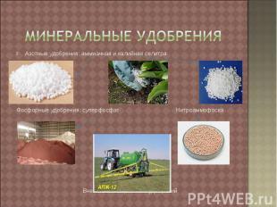 Минеральные удобрения Азотные удобрения: аммиачная и калийная селитраФосфорные у