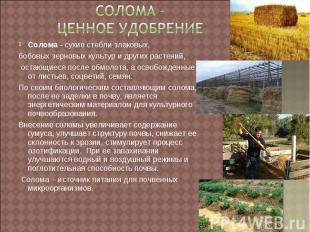 Солома – ценное удобрение Солома - сухие стебли злаковых,бобовых зерновых культу