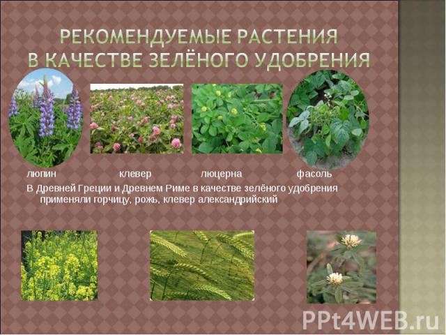 Рекомендуемые растения в качестве зелёного удобрения люпин клевер люцерна фасольВ Древней Греции и Древнем Риме в качестве зелёного удобрения применяли горчицу, рожь, клевер александрийский