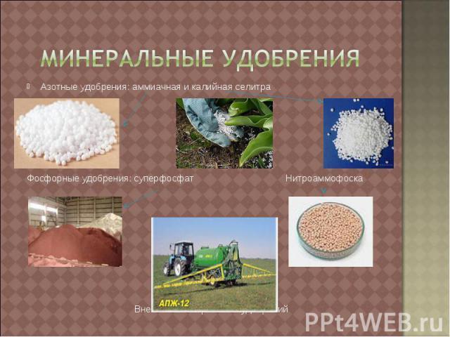 Минеральные удобрения Азотные удобрения: аммиачная и калийная селитраФосфорные удобрения: суперфосфат Нитроаммофоска Внесение минеральных удобрений