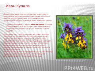 Иван Купала Древние язычники-славяне до прихода православия поклонялись многочис