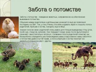 Забота о потомстве Забота о потомстве - поведение животных, направленное на обес