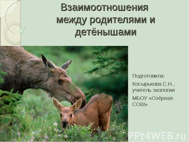 Взаимоотношения между родителями и детёнышами Подготовила:Косырькова С.Н., учитель экологииМБОУ «Озёрная СОШ»