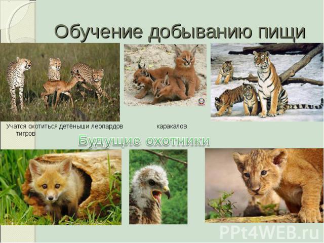 Обучение добыванию пищи Будущие охотники