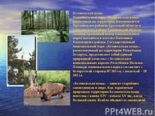 Беловежская пуща.Национальный парк «Беловежская пуща» расположен на территории К