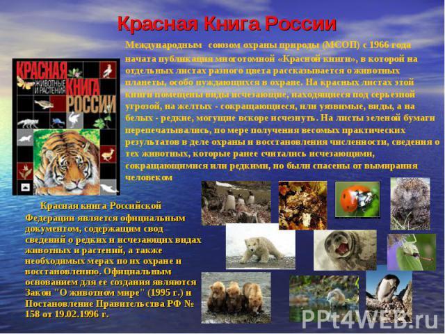 Красная Книга России Международным союзом охраны природы (МСОП) с 1966 года начата публикация многотомной «Красной книги», в которой на отдельных листах разного цвета рассказывается о животных планеты, особо нуждающихся в охране. На красных листах э…