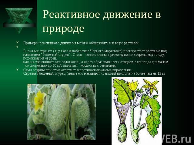 Реактивное движение в природе Примеры реактивного движения можно обнаружить и в мире растений. В южных странах ( и у нас на побережье Черного моря тоже) произрастает растение под названием