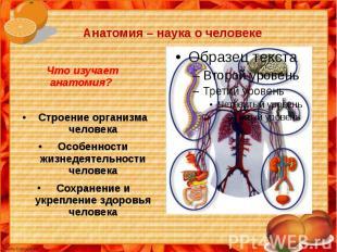 Анатомия – наука о человеке Что изучает анатомия?Строение организма человекаОсоб