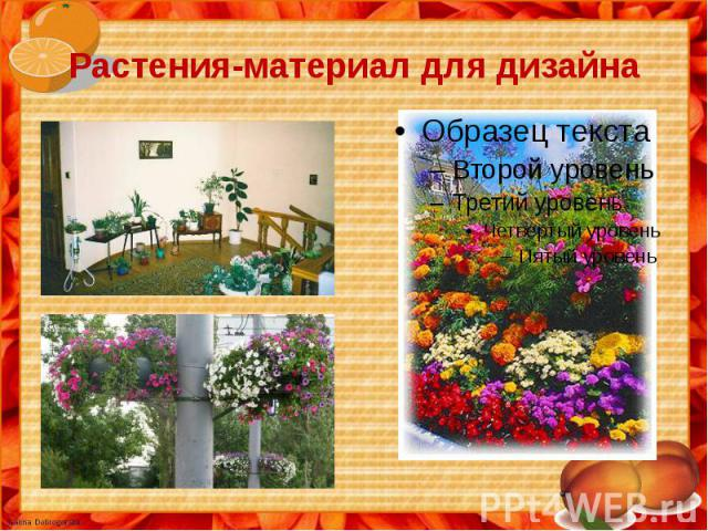Растения-материал для дизайна