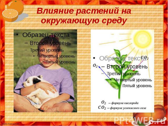 Влияние растений на окружающую среду