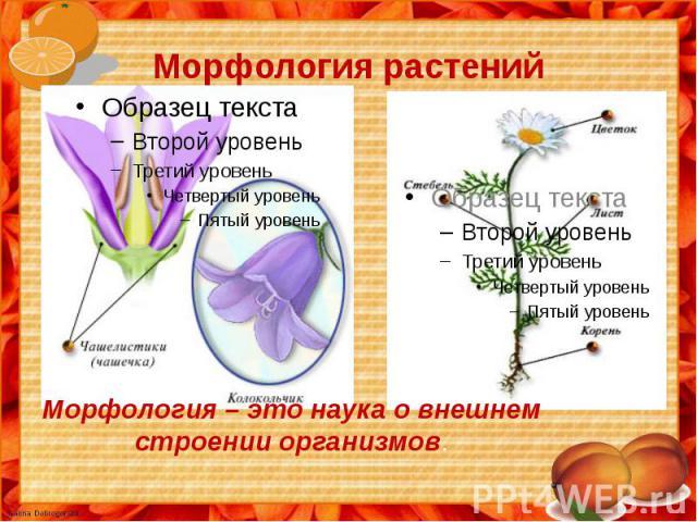Морфология растений ММорфология – это наука о внешнем строении организмов.