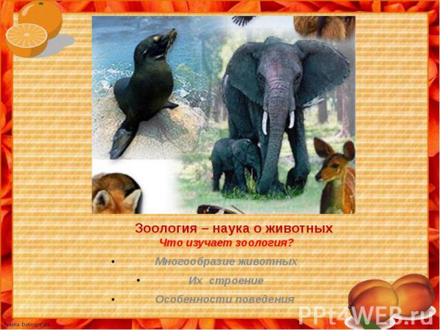 Зоология – наука о животных Что изучает зоология? Многообразие животныхИх строениеОсобенности поведения