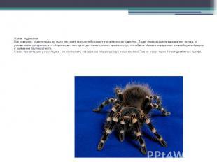 Живая гидравликаВсе наверное, видели паука, но мало кто знает, сколько тайн хран