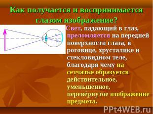 Как получается и воспринимается глазом изображение? Свет, падающий в глаз, прело