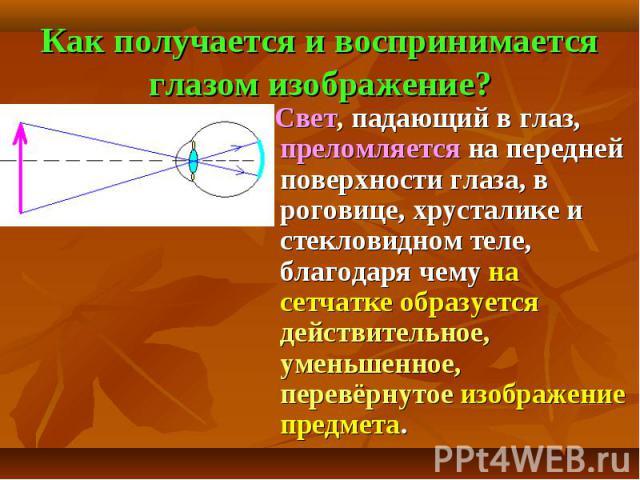 Как получается и воспринимается глазом изображение? Свет, падающий в глаз, преломляется на передней поверхности глаза, в роговице, хрусталике и стекловидном теле, благодаря чему на сетчатке образуется действительное, уменьшенное, перевёрнутое изобра…