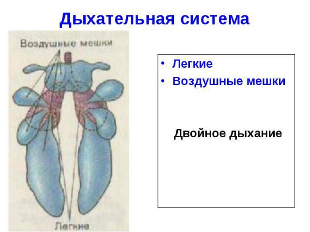 Дыхательная система ЛегкиеВоздушные мешки Двойное дыхание