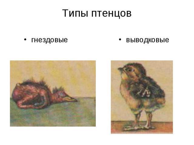 Типы птенцов гнездовыевыводковые