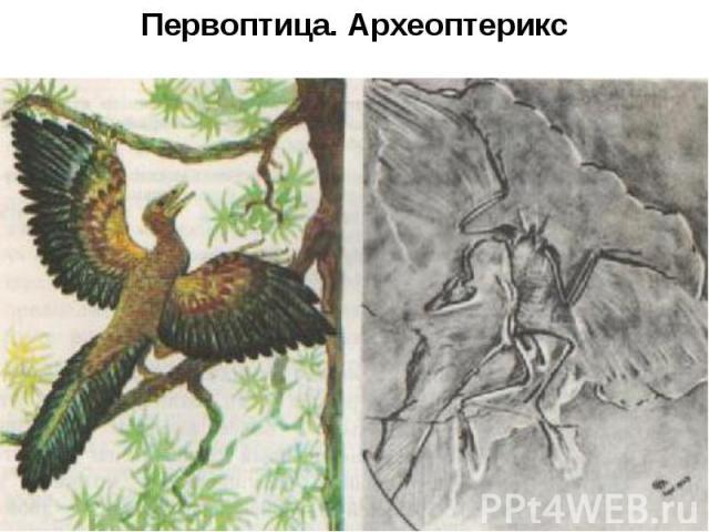 Первоптица. Археоптерикс
