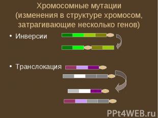 Хромосомные мутации(изменения в структуре хромосом, затрагивающие несколько гено