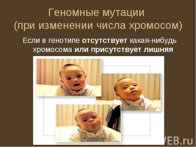 Геномные мутации (при изменении числа хромосом) Если в генотипе отсутствует какая-нибудь хромосома или присутствует лишняя