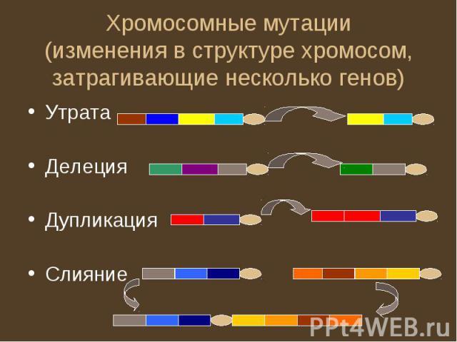 Хромосомные мутации(изменения в структуре хромосом, затрагивающие несколько генов)