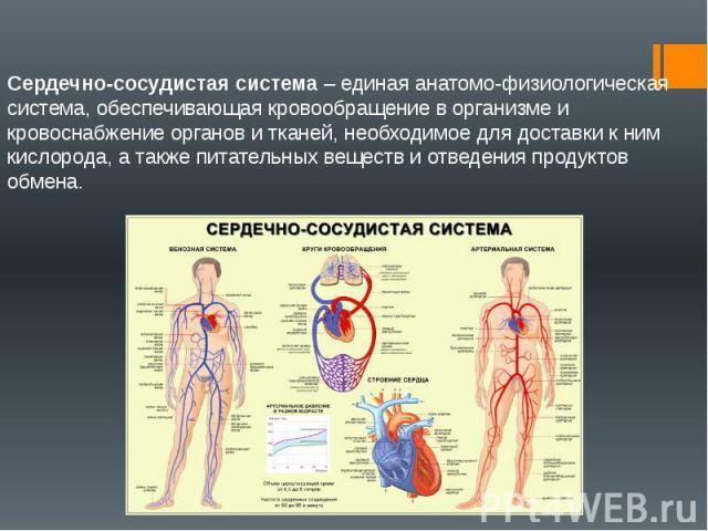 Сердечно-сосудистая система – единая анатомо-физиологическая система, обеспечивающая кровообращение в организме и кровоснабжение органов и тканей, необходимое для доставки к ним кислорода, а также питательных веществ и отведения продуктов обмена.