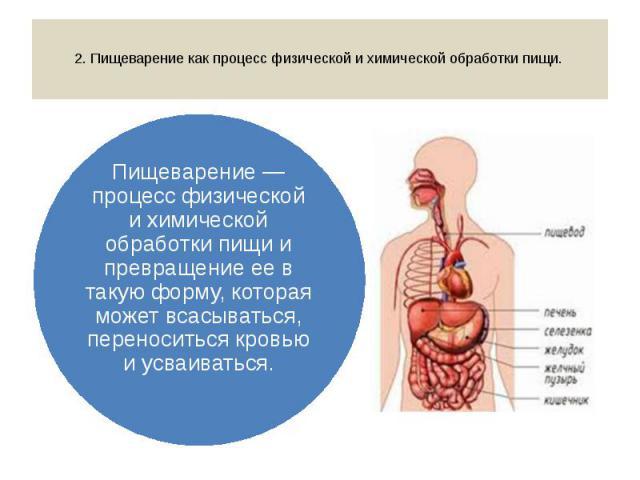 2. Пищеварение как процесс физической и химической обработки пищи. Пищеварение — процесс физической и химической обработки пищи и превращение ее в такую форму, которая может всасываться, переноситься кровью и усваиваться.