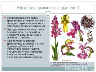 Микориза травянистых растений Исследования 3500 видов травянистых растений Росси