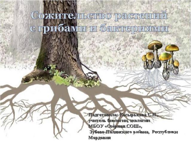 Сожительство растений с грибами и бактериями Подготовила: Косырькова С.Н.,учитель биологии, экологии МБОУ «Озёрная СОШ», Зубово-Полянского района, Республики Мордовия