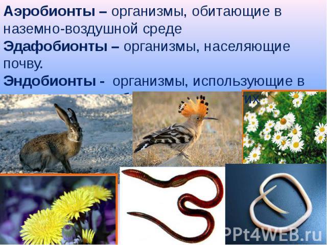 Аэробионты – организмы, обитающие в наземно-воздушной среде Эдафобионты – организмы, населяющие почву.Эндобионты - организмы, использующие в качестве среды обитания тела других организмов.