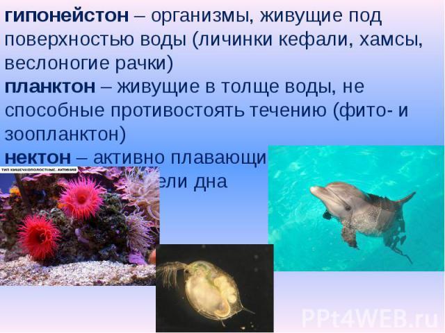 гипонейстон – организмы, живущие под поверхностью воды (личинки кефали, хамсы, веслоногие рачки)планктон – живущие в толще воды, не способные противостоять течению (фито- и зоопланктон)нектон – активно плавающие животныебентос – обитатели дна