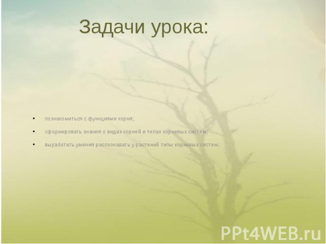Задачи урока: познакомиться с функциями корня;сформировать знания о видах корней и типах корневых систем;выработать умения распознавать у растений типы корневых систем;