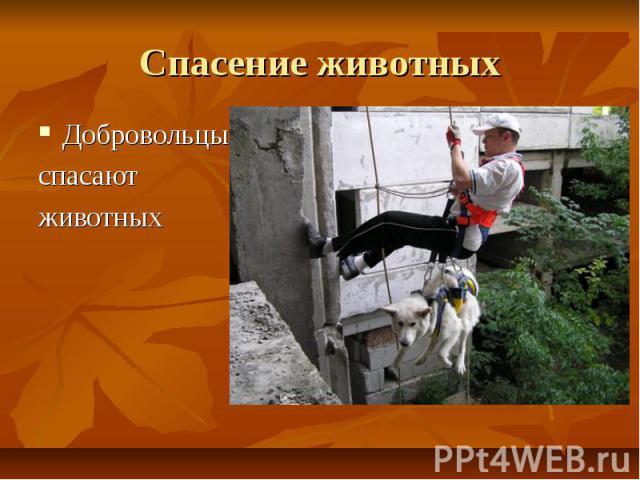 Спасение животных Добровольцыспасают животных