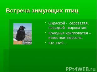 Встреча зимующих птиц Окраской - сероватая, повадкой –вороватая, Крикунья хрипло