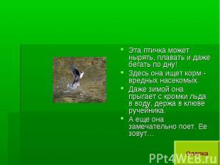 Эта птичка может нырять, плавать и даже бегать по дну!Здесь она ищет корм - вред