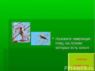 Назовите зимующих птиц, на голове которых есть хохол.