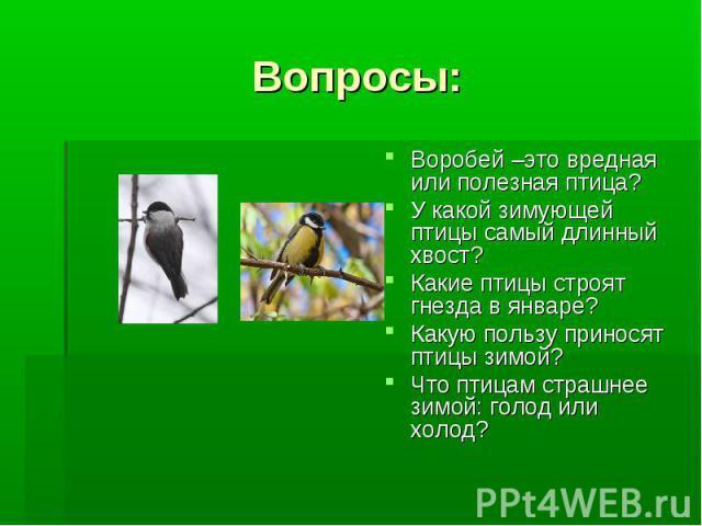 Вопросы: Воробей –это вредная или полезная птица?У какой зимующей птицы самый длинный хвост?Какие птицы строят гнезда в январе?Какую пользу приносят птицы зимой?Что птицам страшнее зимой: голод или холод?