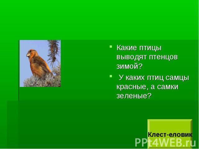 Какие птицы выводят птенцов зимой? У каких птиц самцы красные, а самки зеленые?